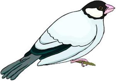 Essay on kiwi bird in hindi language #1 - Free Online
